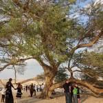 Bahrain - Tree of Life