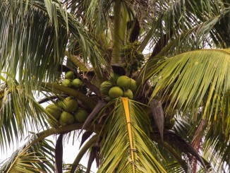 CHINA - The Hainan coconut plantage and mangroves as a day trip from Haikou