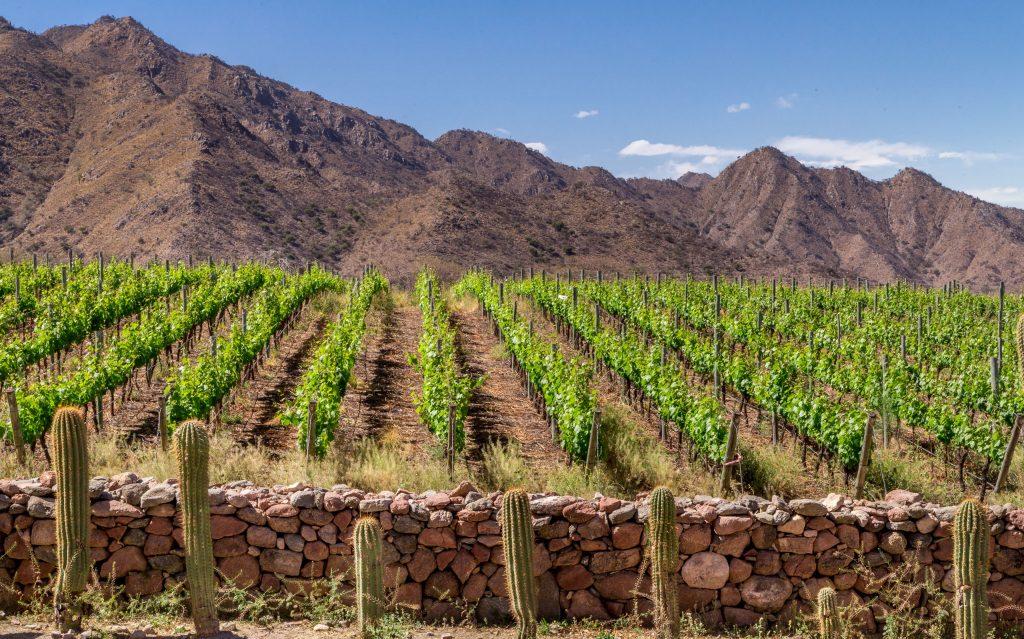 Vineyard Cafayate - ARGENTINA - The northwest; best 7-day Salta itinerary including Jujuy