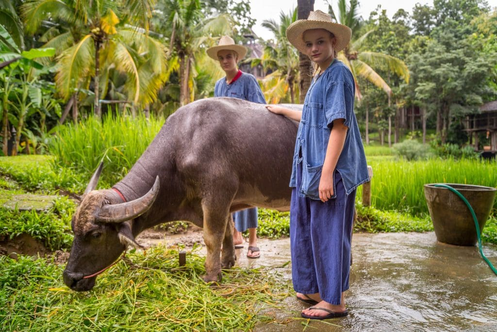 Buffalo Washing - THAILAND - Four Seasons Chiang Mai: A luxury treasure in the Mae Rim Valley