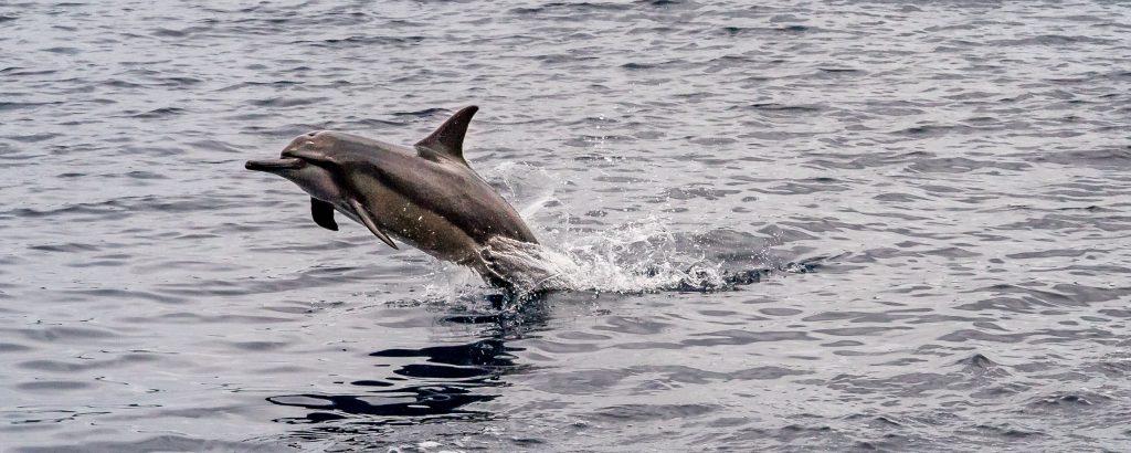 Coongoola Cruise Dolphin Jump - VANUATU - 7 days in Vanuatu itinerary: travel guide, tips & inspiration