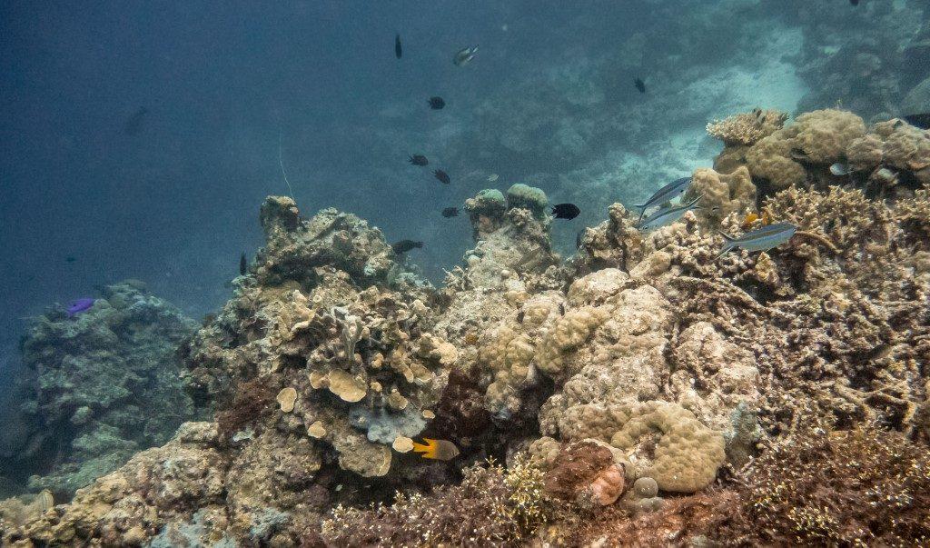 Mundi Diving - SOLOMON ISLANDS - 7 days in Solomon Islands itinerary: travel guide, tips & inspiration
