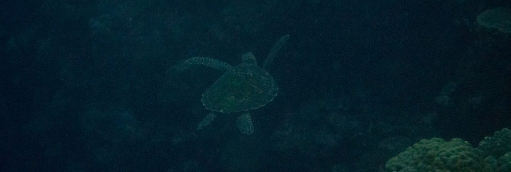 Munda Diving - SOLOMON ISLANDS - World class diving with Dive Munda & an Agnes Gateway Hotel stay