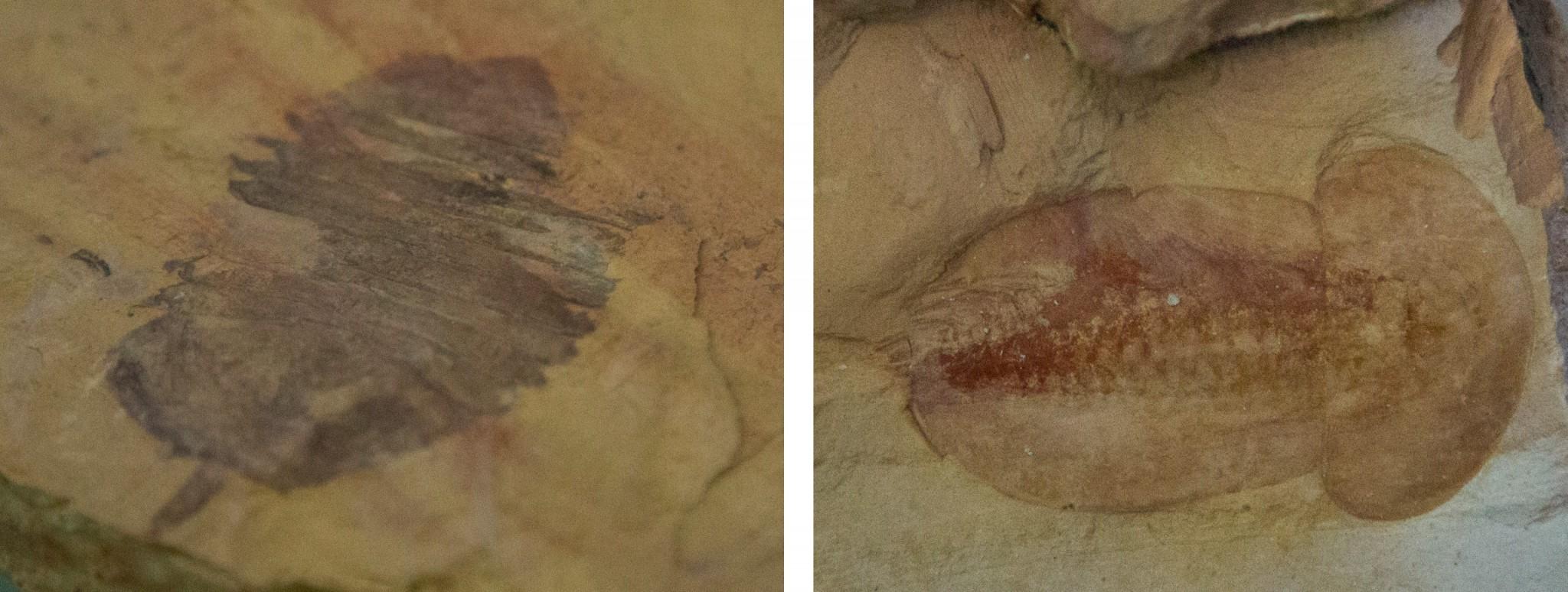 China - Chengjiang Fossil Site