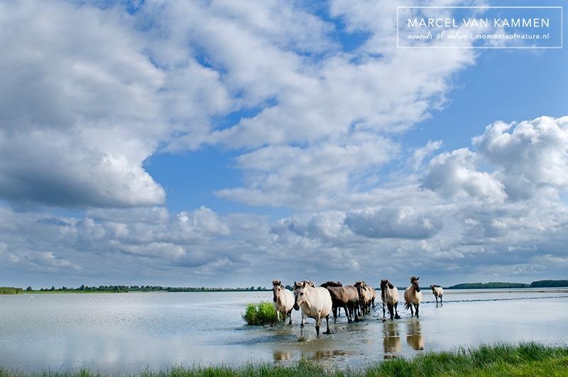 Noord Nederland: Lauwersmeer & Waddenzee