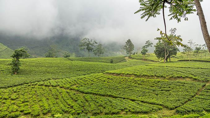 INDONESIA - Bandung day trip: Tangkuban Perahu volcano crater tour, tea plantation & more