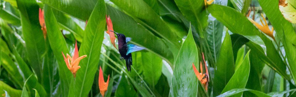 Hummingbird - CARIBBEAN - Antigua, St. Lucia and Barbados: Caribbean island hopping itinerary