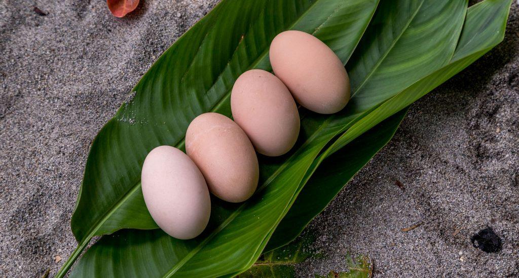 Megapodes Eggs - SOLOMON ISLANDS - Savo Island day trip from Honiara (Guadalcanal)