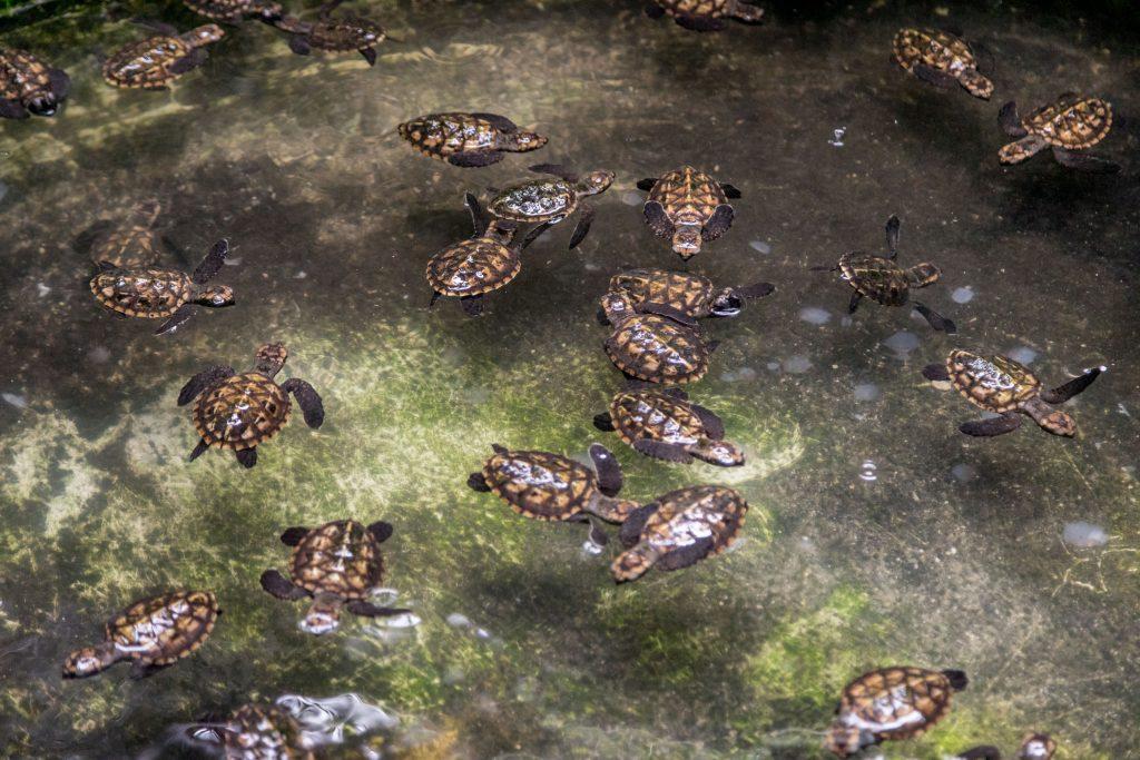 Turtle sanctuary resort - VANUATU - Must do: Coongoola day cruise from Port Vila