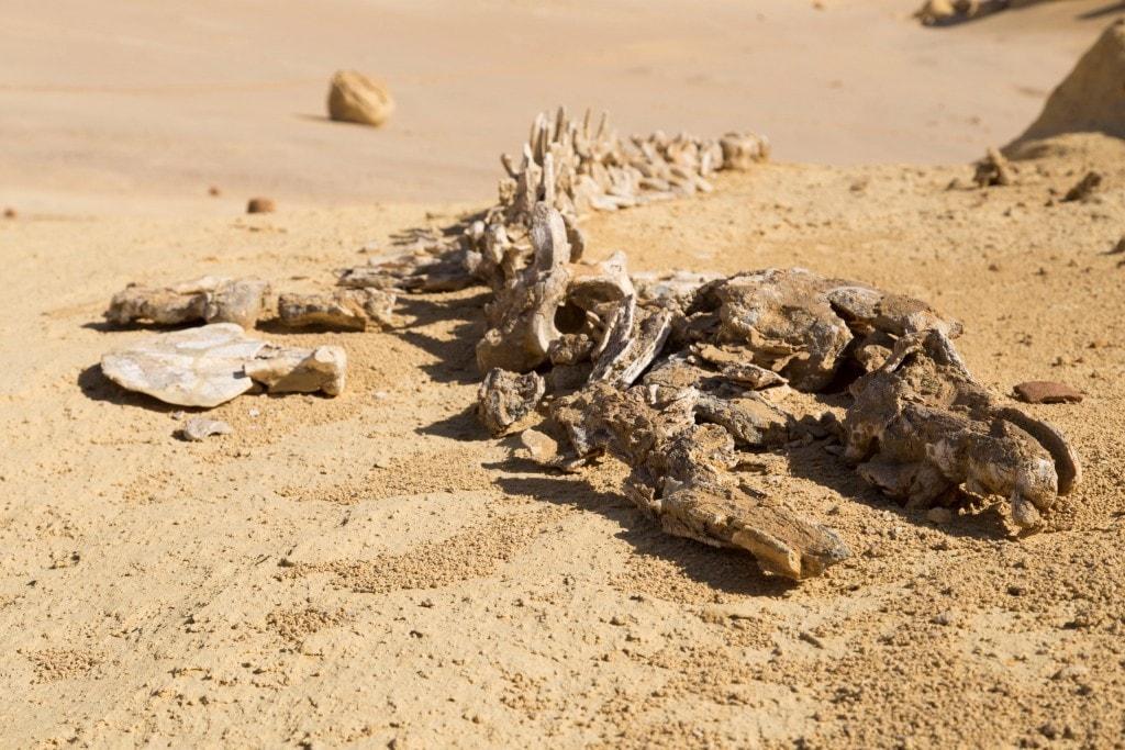 Egypt-Wadi-Al-Hitan-Whale-Valley